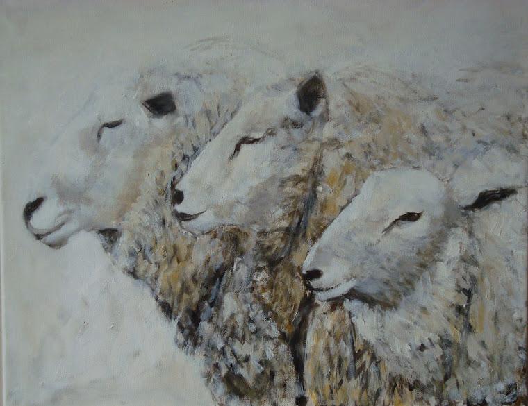 schapen-trio