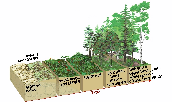 a better understanding of the process of ecological succession Types and stages of ecological succession: ecological succession is the term used to describe what happens to an ecological community over time it refers to more or less predictable and orderly set of changes that happen in the composition or structure of ecological community.