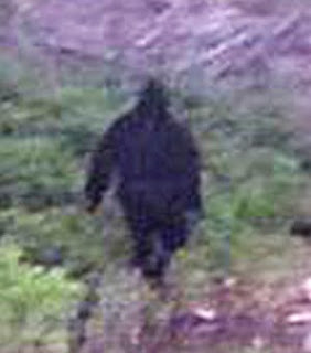 is this a real bigfoot