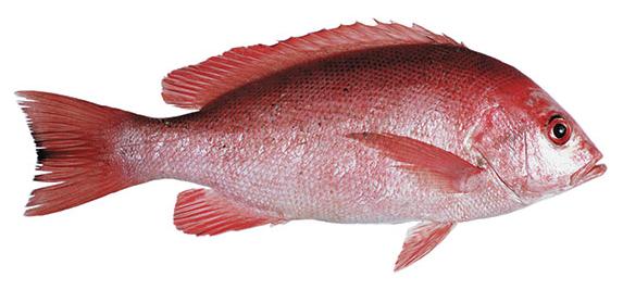 Ikan Merah Pucat