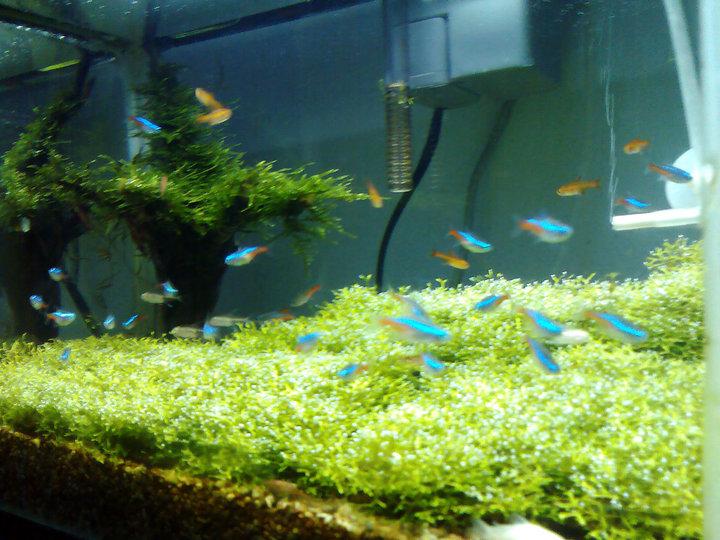 Hobby aquascape - Gambar aquascape ...
