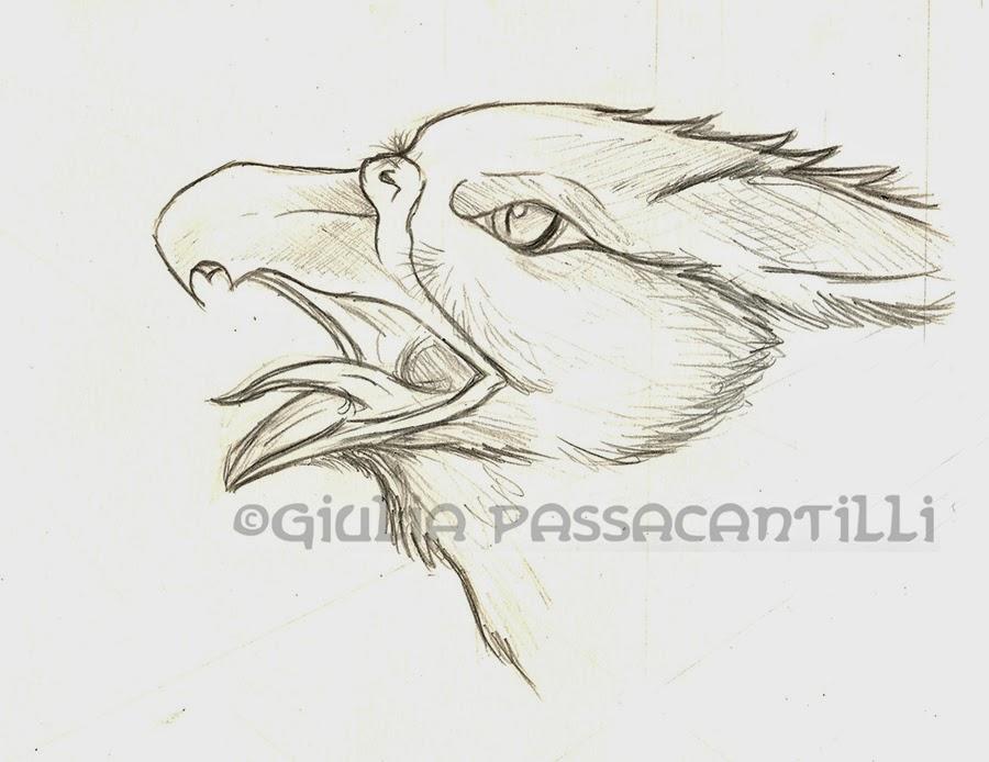 Giulia passacantilli disegni sketch illustrazioni grifone - Semplici disegni di uccelli ...