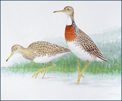 Hakawai New Zeland extinct birds