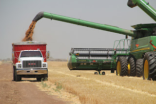 wheat tender on February 2:Egypt bought wheat only from U.S.