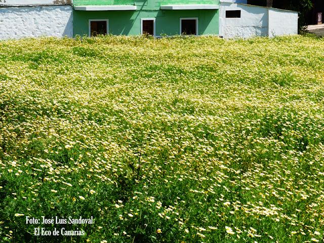 fotos de gran canaria verde