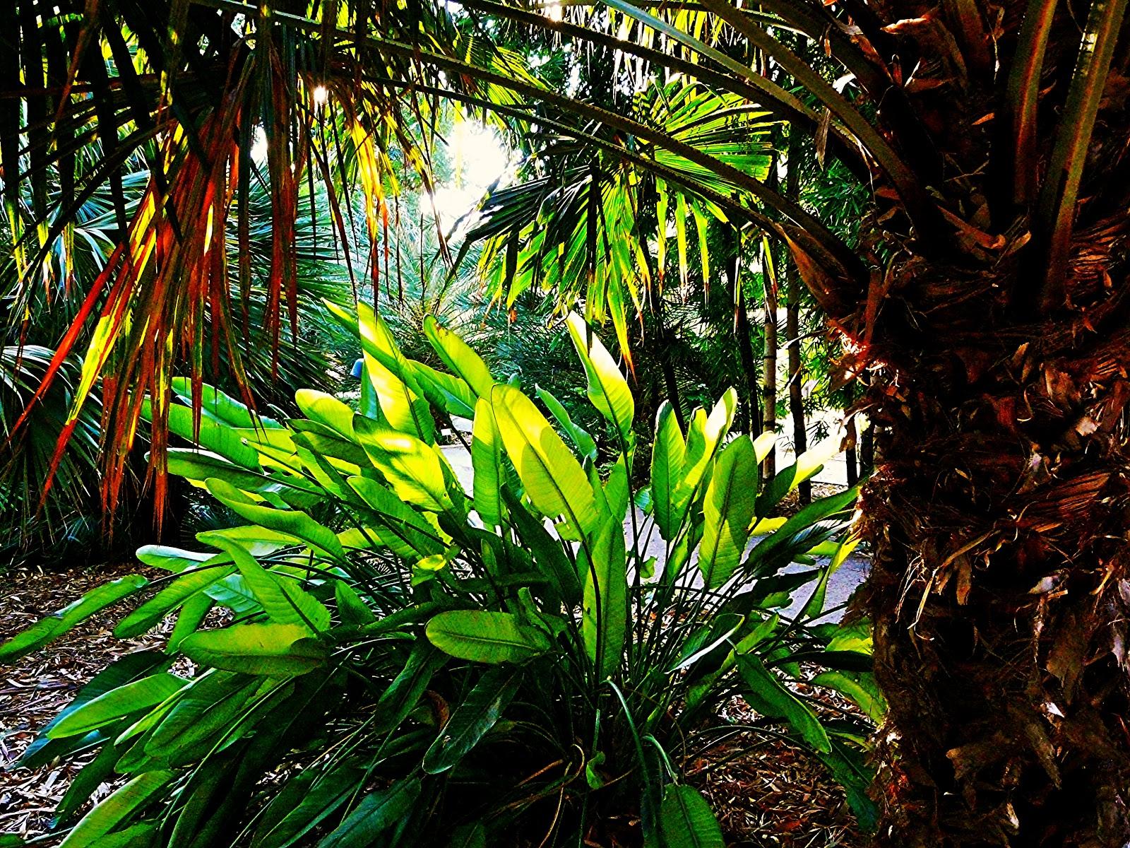 Es hora de ampliar ya el jard n bot nico de valencia - Jardin botanico valencia ...