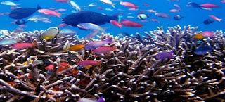 Kekayaan Alam Laut Indonesia