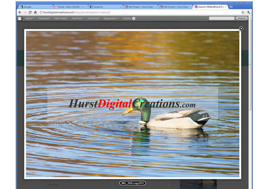 12 WordPress Plugins That Automatically Watermark Images on Your Blog