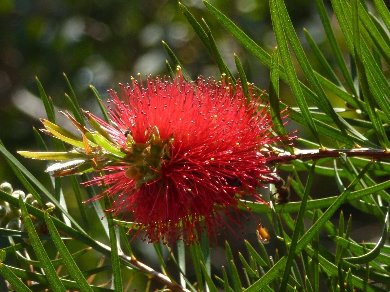 Une vie lire un pas de c te le jardin des mediterrannees for Jardin rayol canadel