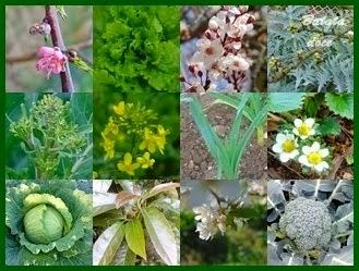Plantações de Março