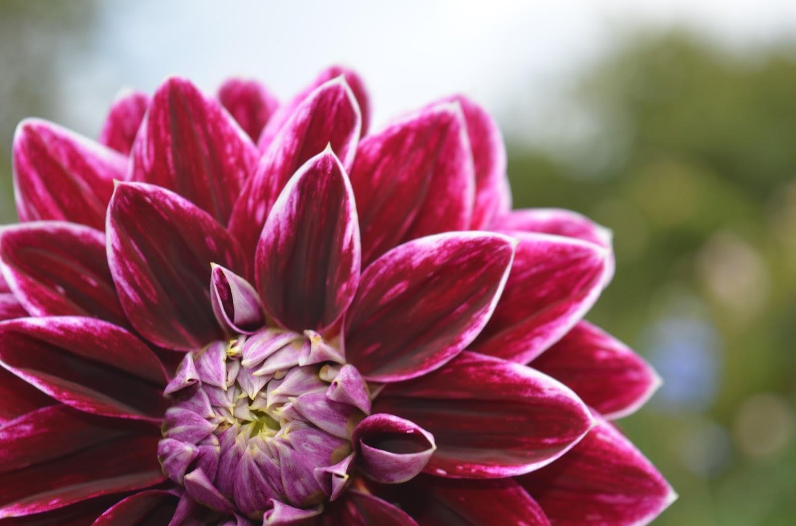 Rebecca\'s Texas Garden: Monet\'s Giverny Garden: The Clos Normand ...