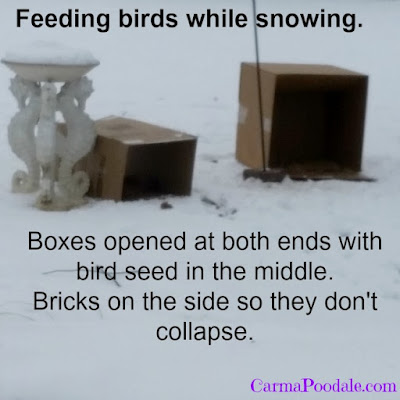 Feeding wildlife during the snow.