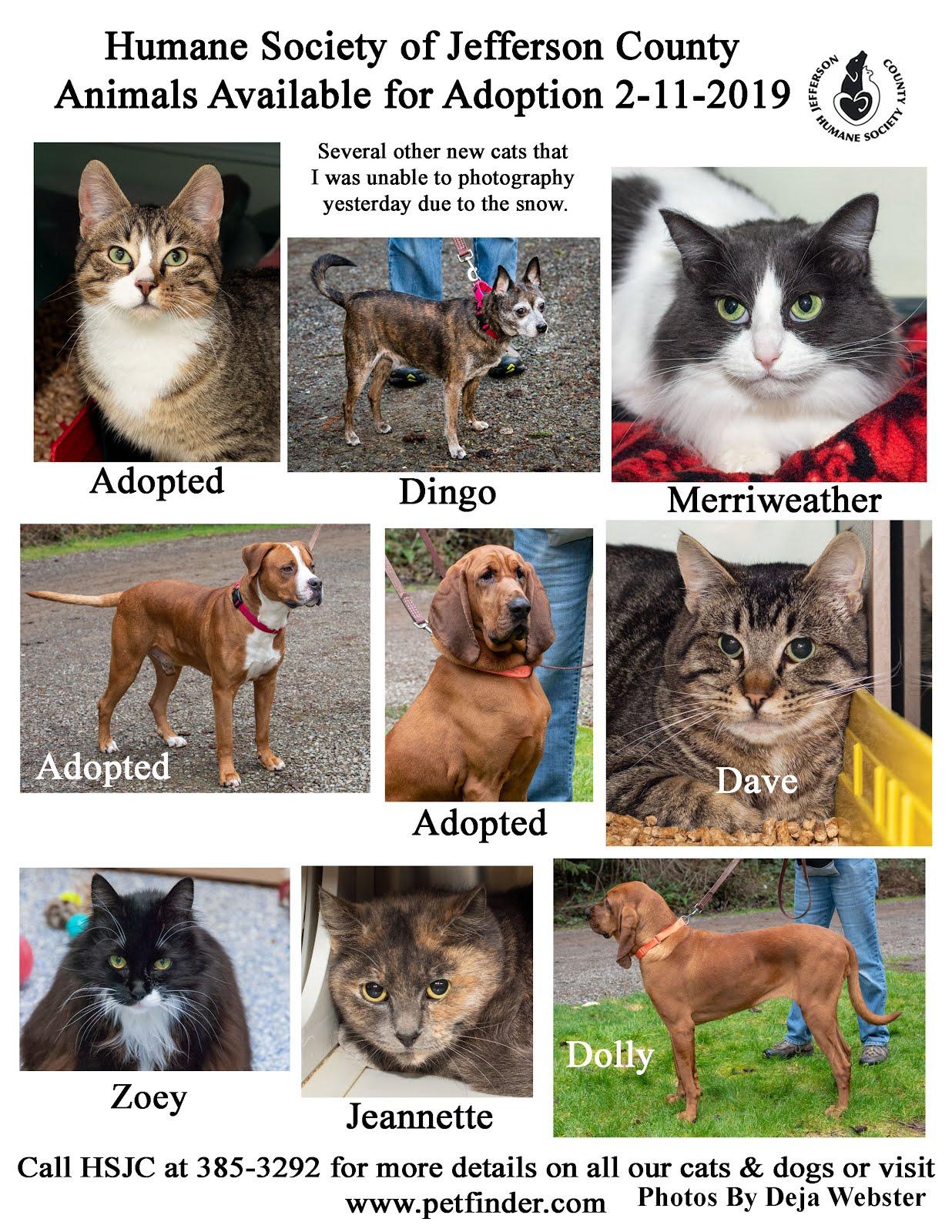 2-15 Adoption Poster