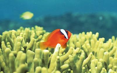 ảnh đẹp động vật trong lòng đại dương, những sinh vật trong lòng đại dương, những sinh vật đẹp trong long đại dương, những loài cá đẹp nhất, ảnh đẹp về loài rùa,.