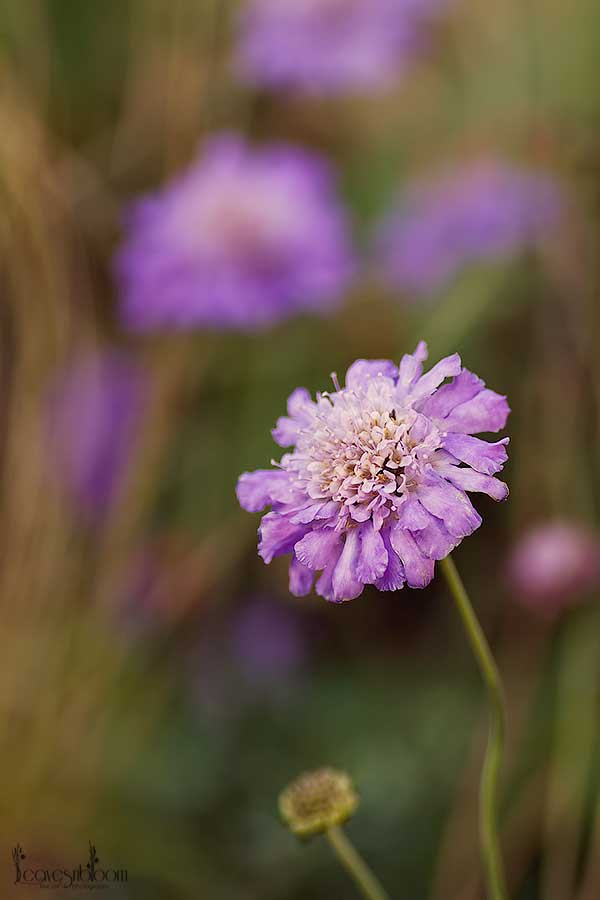 Flowers That Are in Season in August | Garden Guides
