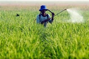 membuat pestisida organik praktis