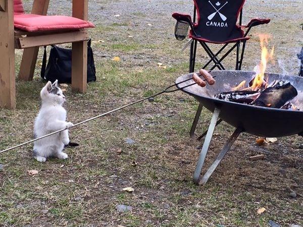 Gato mestre churrasqueiro