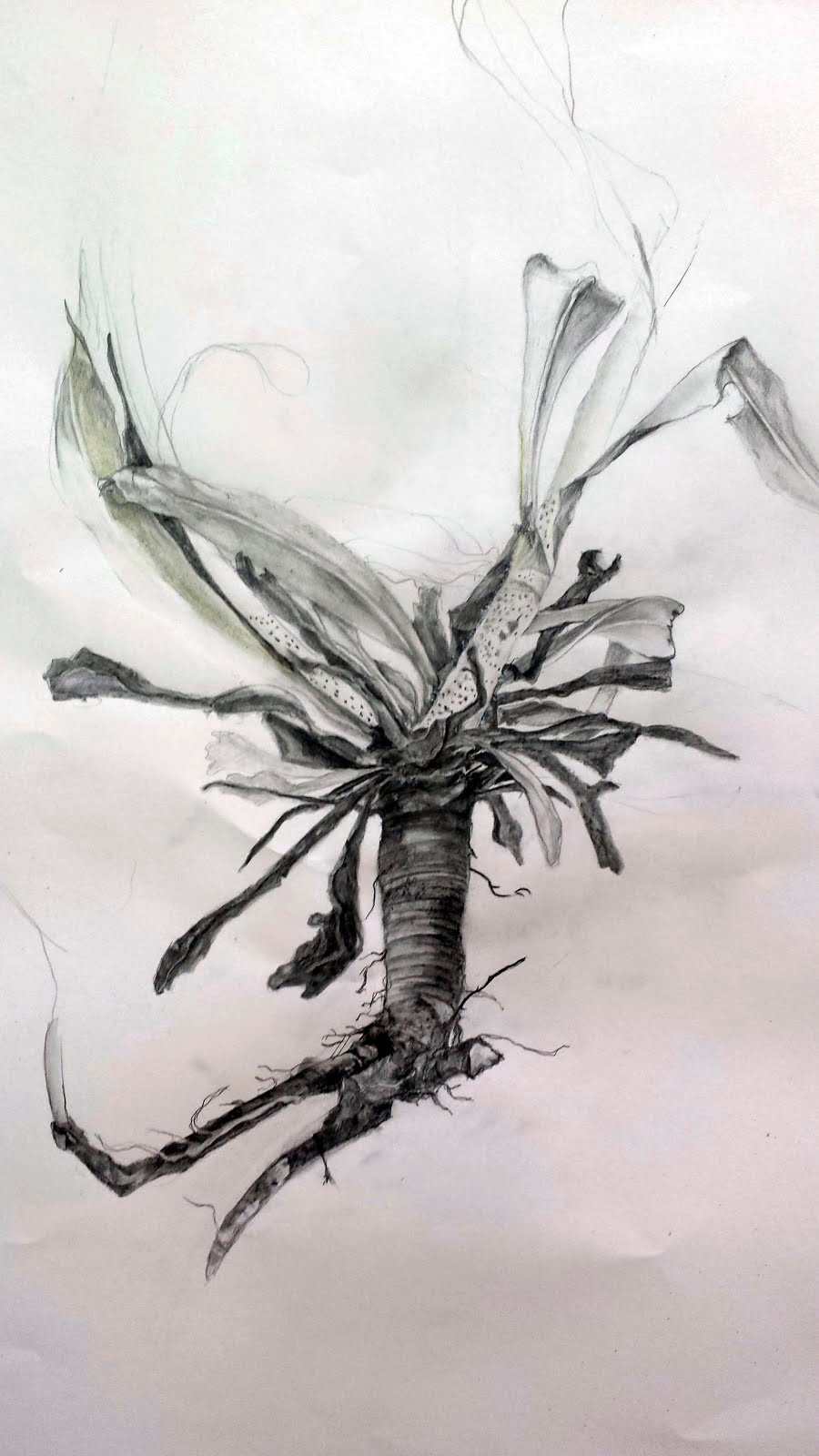 Viper's Bugloss