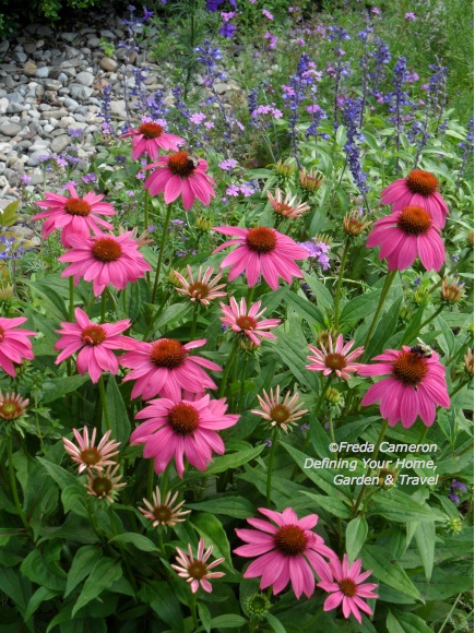 coneflower echinacea Pow Wow Wild Berry  by Defining Your Home Garden and Travel