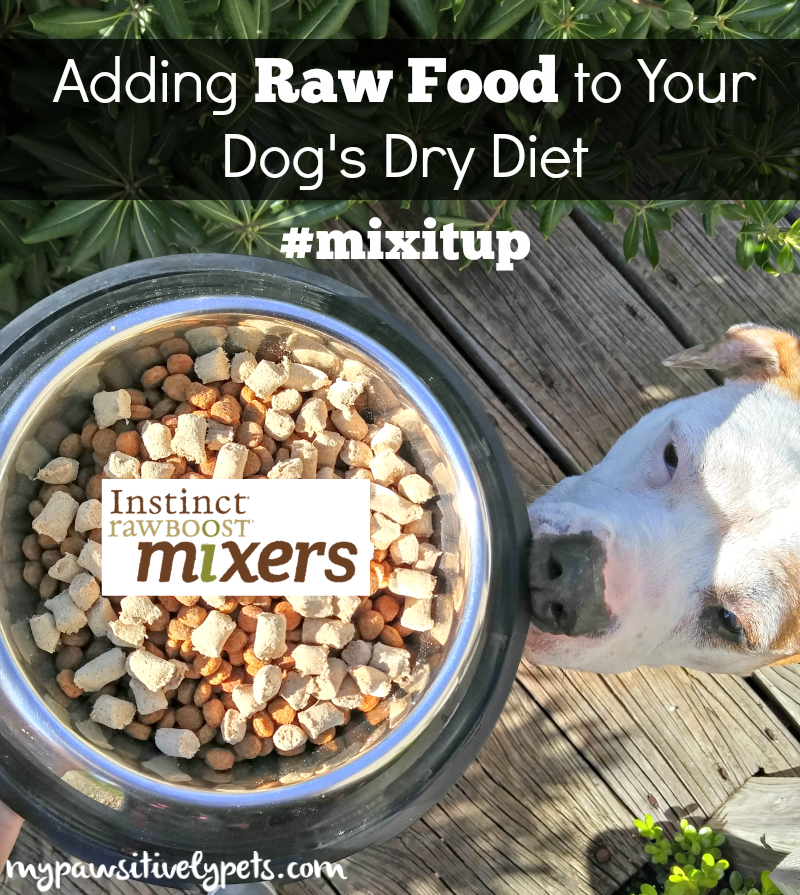 how to change dog to raw diet