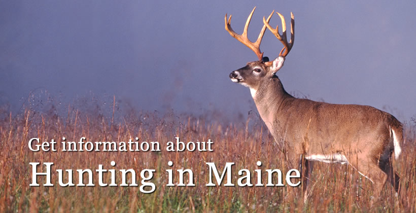 Hunting licenses maine department of inland fisheries for Fishing license maine