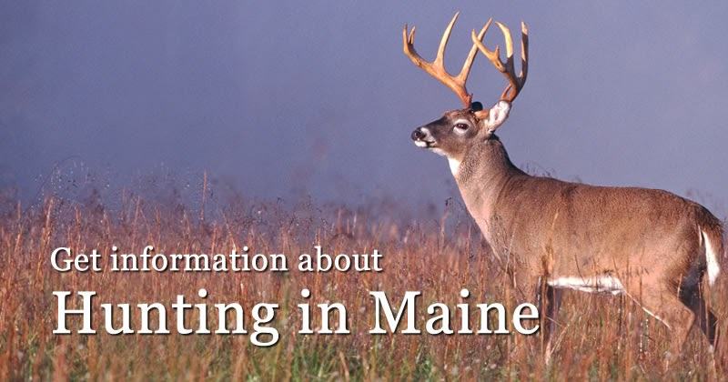 Hunting licenses maine department of inland fisheries for Disabled fishing license