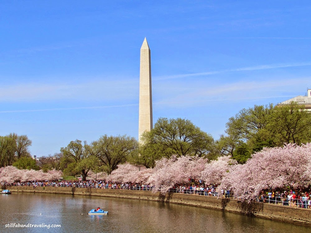 Tidal Basin view during Cherry Blossom Festival in DC
