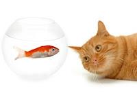 Cat and fish Puzzle