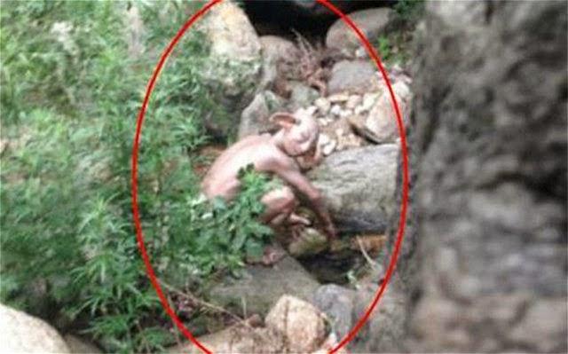 Captan a misteriosa criatura en bosque de China