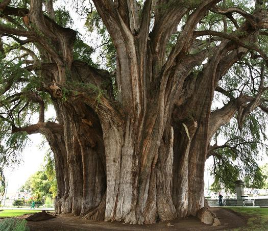 Ten tall trees coupon