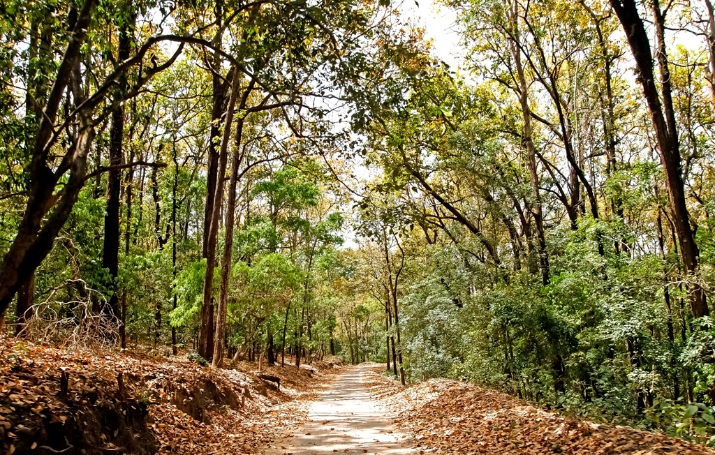 Jungle trail: Jim Corbett National Park
