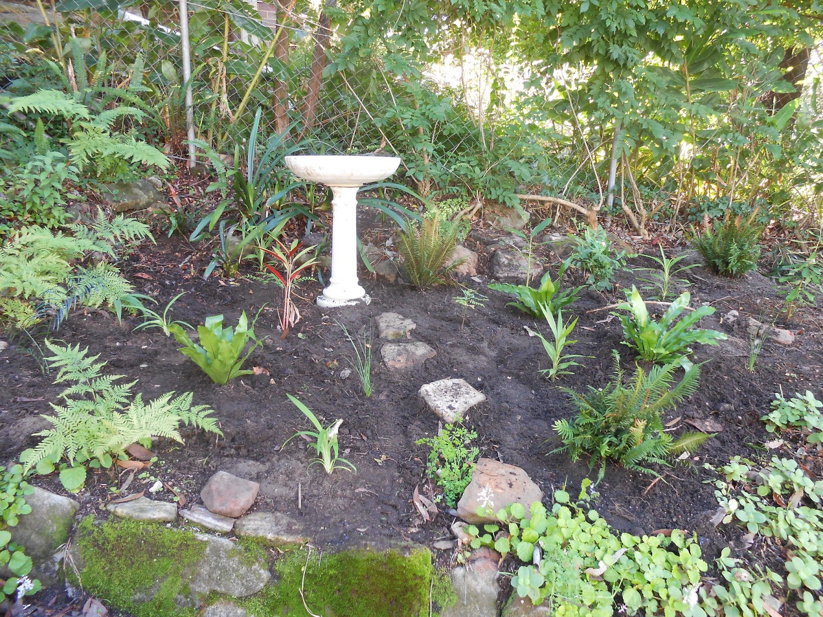 megan seagren u0027s journal planting a native australian shade garden