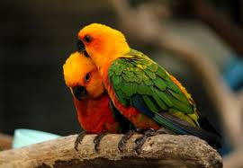 Zoo Animals - Parrots