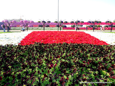 unique flowers at Dubai Miracle Garden