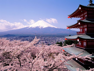 cherry blossoms japan mt fuji