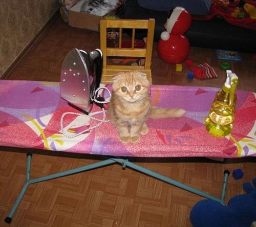 Fotos simpáticas con gatos