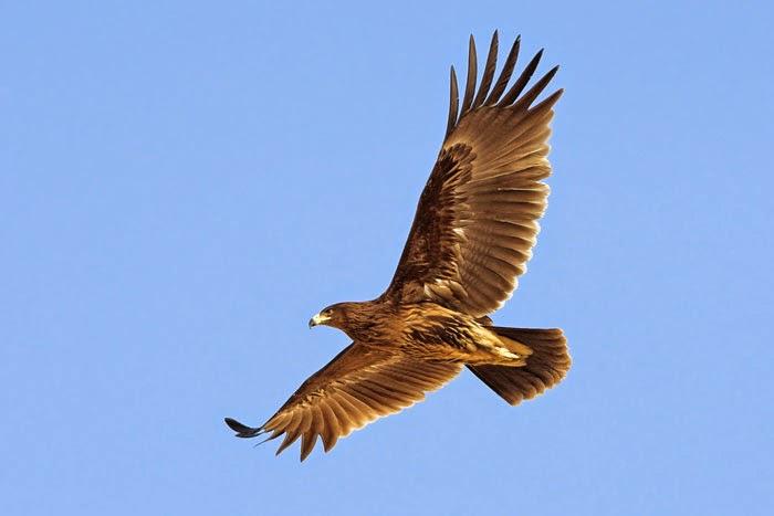 Conscience sans objet non dualisme - Jeux d oiseau qui vole ...