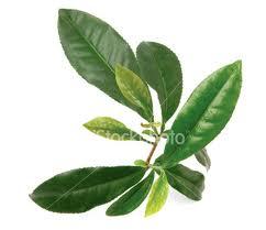 te-verde-cáncer