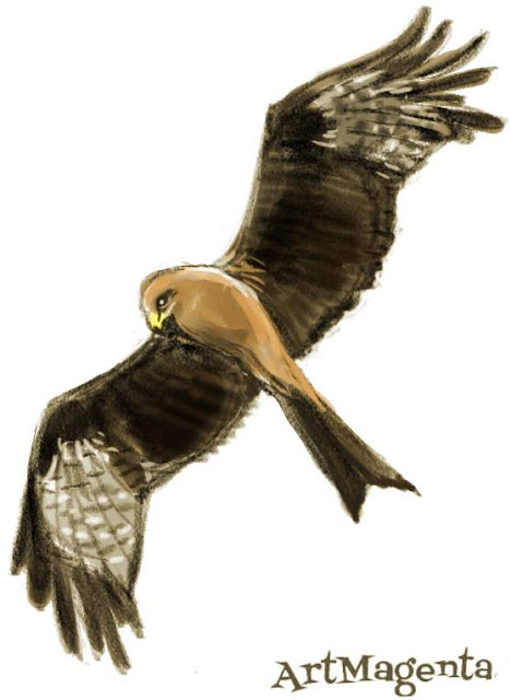 Black Kite sketch painting. Bird art drawing by illustrator Artmagenta