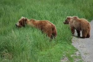 Alaska-wild life
