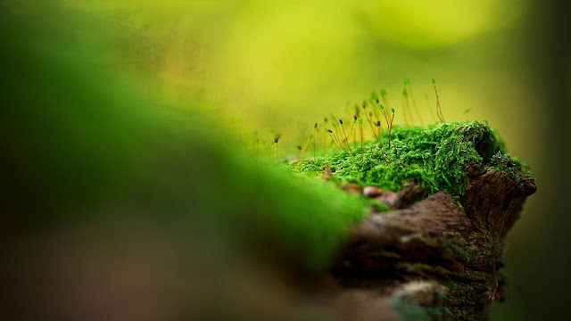 Green Moss HD Wallpaper