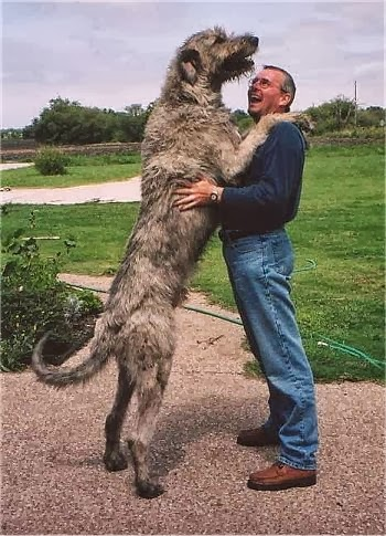 The 10 largest Dog Breeds