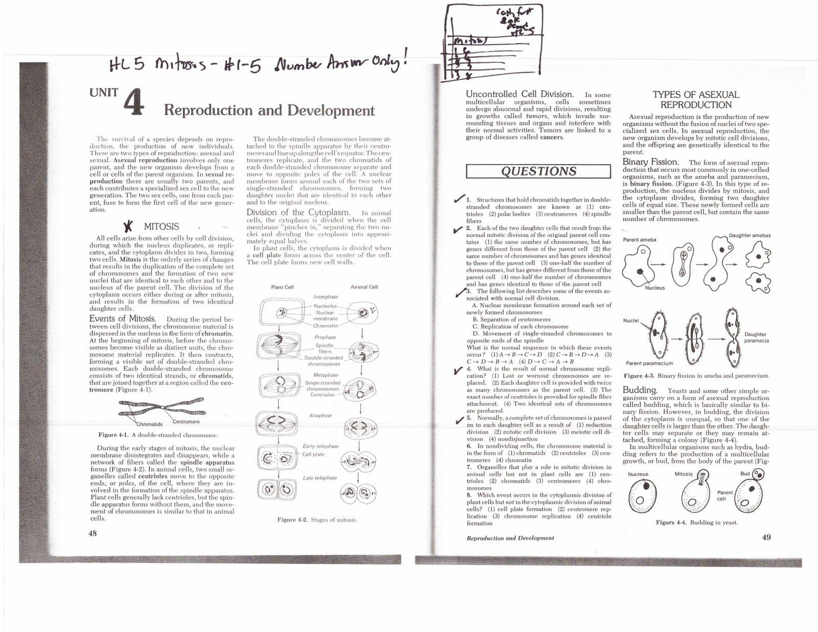 Mitosis flip book http www drgcdms7 blogspot com