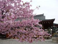 桜の勢いに隠れる講堂
