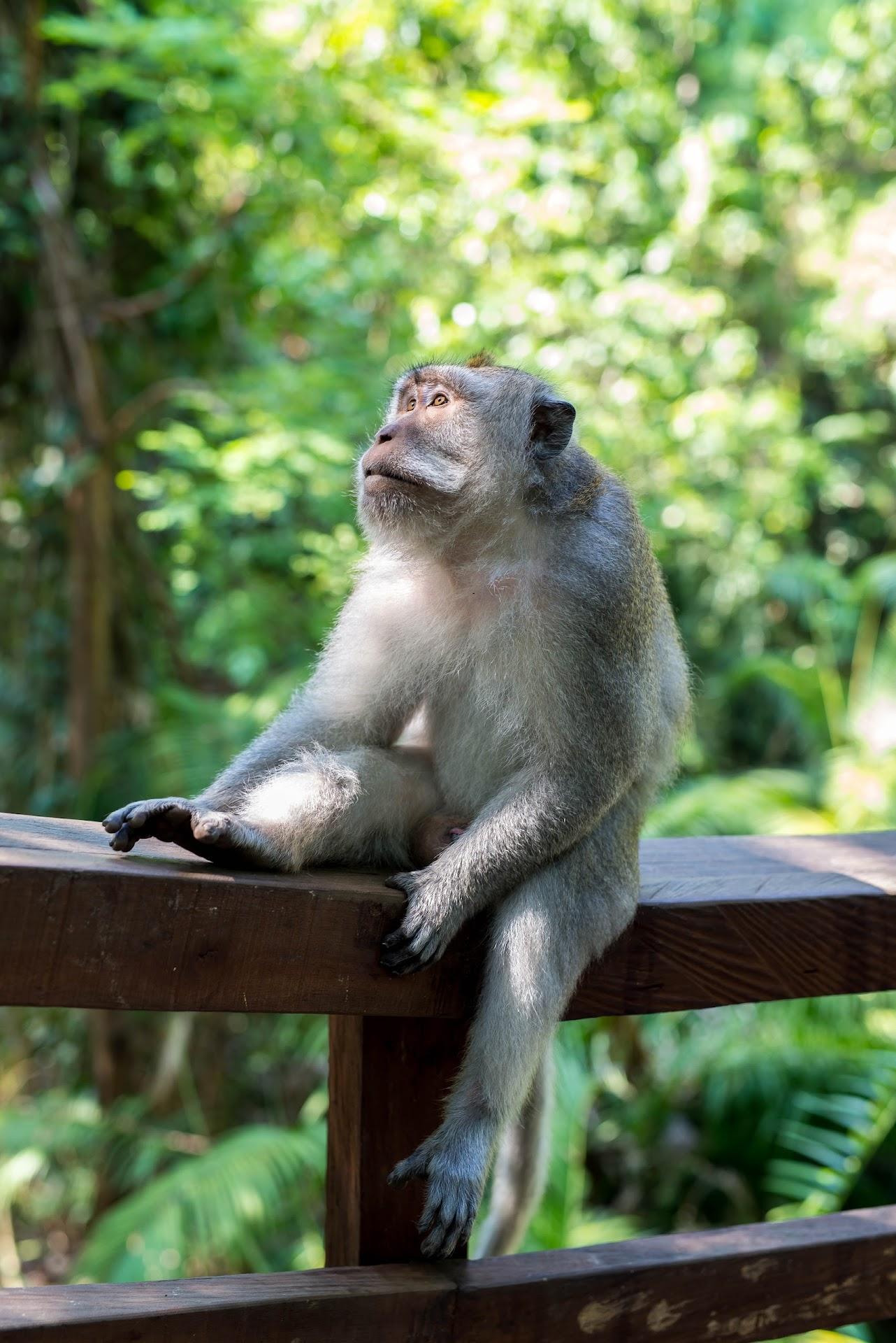bali travel, travel blog, california san francisco bay area blogger, nature photographer, animals, monkey photography, bali ubud, monkey forest sanctuary, best things to do in bali