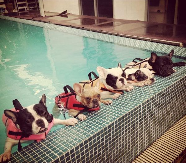 funny dog picture, swimming dogs