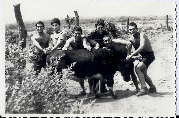 A compra de um touro