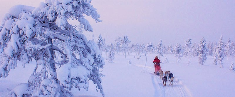 dogsledding Pinetree Lodge