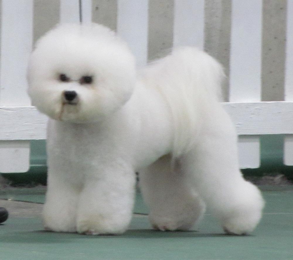 Hamilton Dog Show