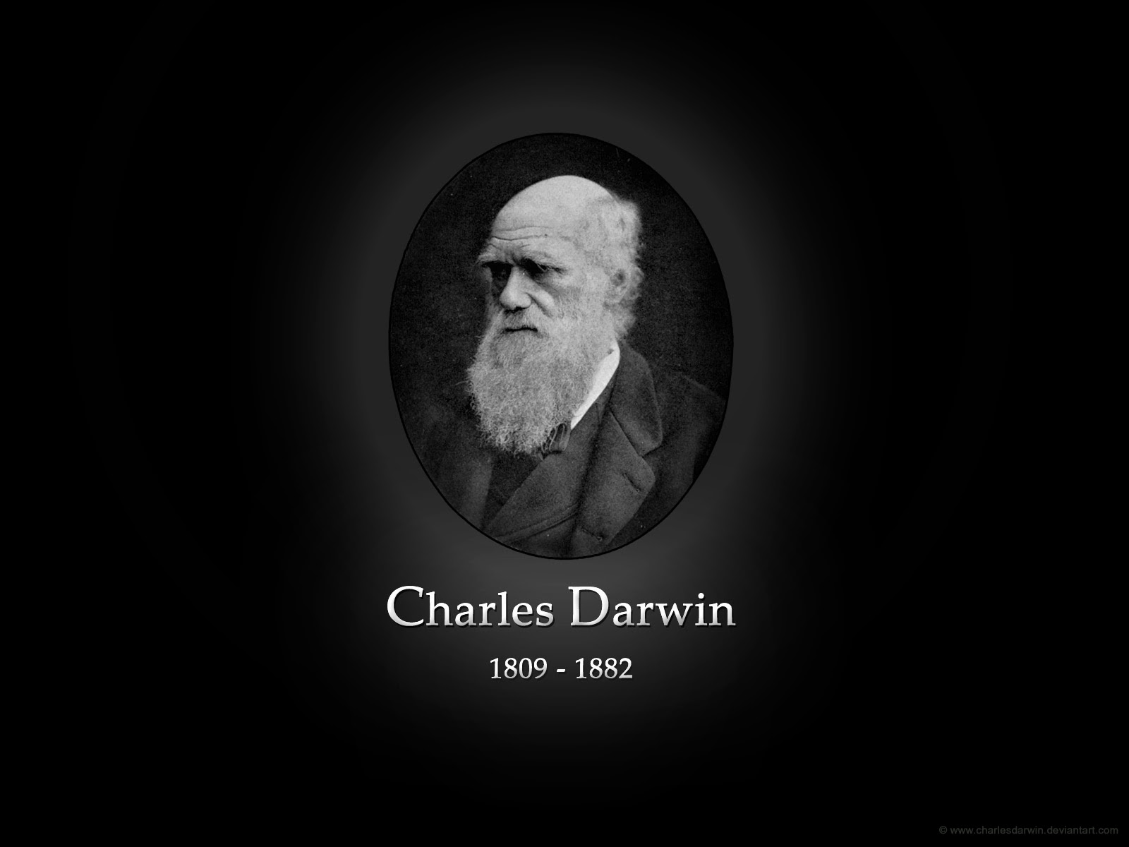 discuss the importance of charles darwin Charles darwin is centrally important in the development of scientific and humanist ideas because he first made people aware of their place in the evolutionary humanist families discuss family life 'collective and the young charles grew up in an extended family who knew the.